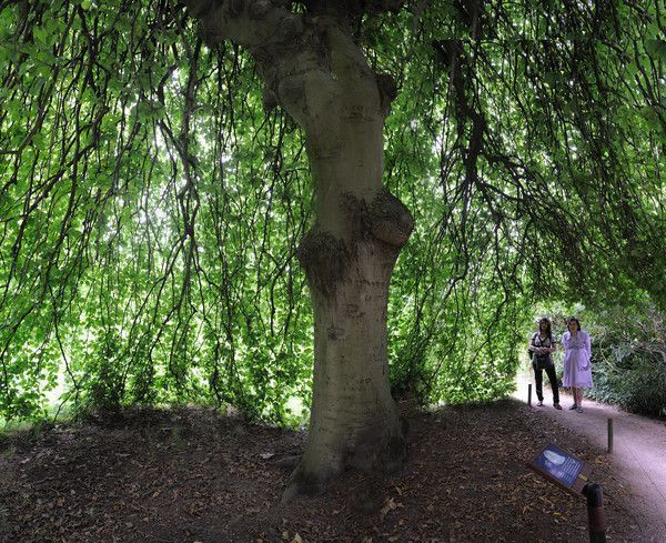 Jardin extraordinaire centerblog for Jardin extraordinaire